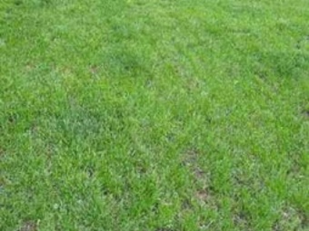 Order Lawn Care in Bryan, TX, 77807