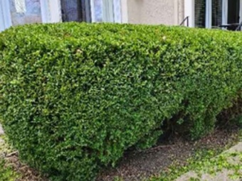 Order Lawn Care in Sharonville, OH, 45241