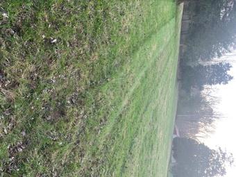 Order Lawn Care in Centerville, TN, 37033