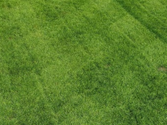 Order Lawn Care in Orchard Park, NY, 14127