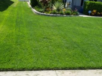 Order Lawn Care in Apopka, FL, 32703