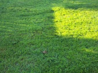 Order Lawn Care in Schertz, TX, 78108