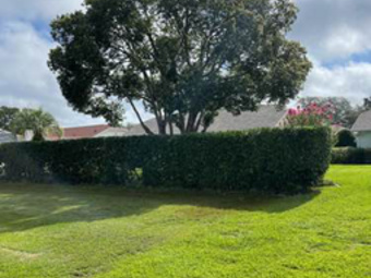 Order Lawn Care in New Port Richey, FL, 34656