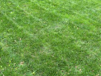Order Lawn Care in Davenport, IA, 52806