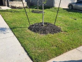 Order Lawn Care in Temple, TX, 76502