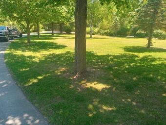 Order Lawn Care in Fowler, MI, 48835