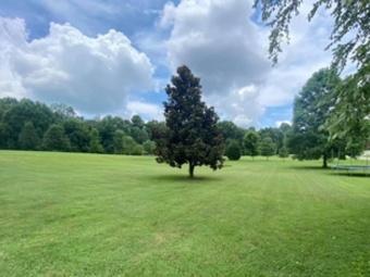 Order Lawn Care in Chapmansboro, TN, 37035