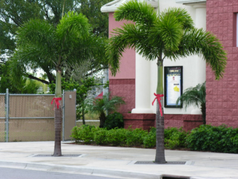 Order Lawn Care in Houston, TX, 77091
