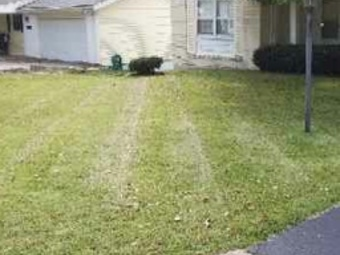 Order Lawn Care in St. Louis, MO, 63119
