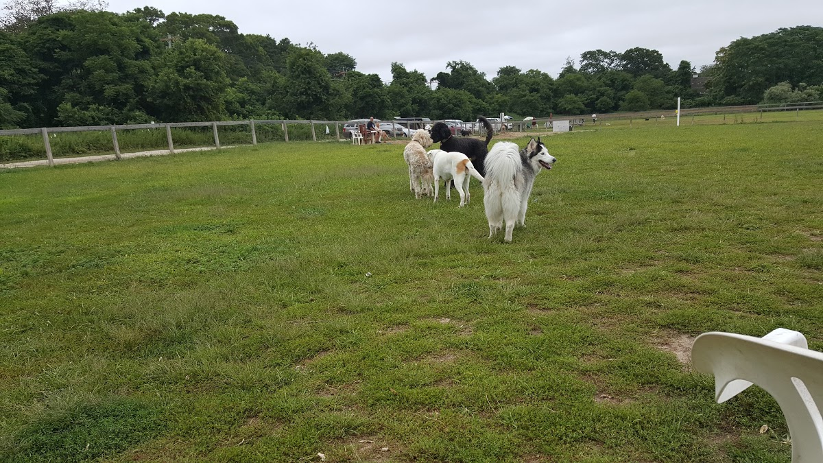 affordable-grass-cutting-businesses-in-Brookhaven-NY