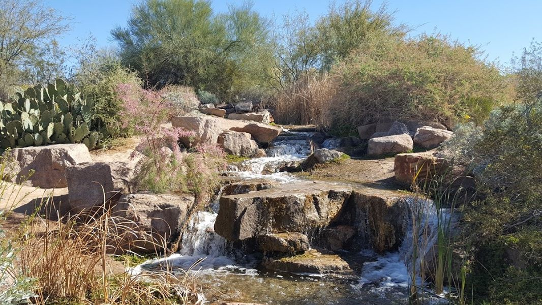 residential-lawn-cutting-businesses-in-Chandler-AZ