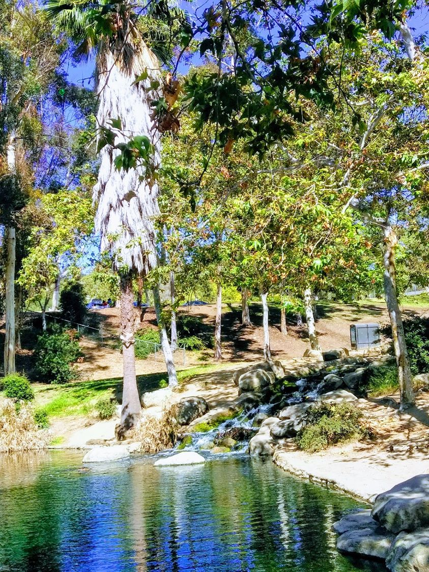 affordable-landscaping-maintenance-services-in-Culver City-CA