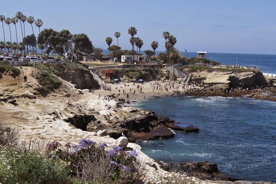 the-yard-cutting-businesses-in-La Jolla-CA