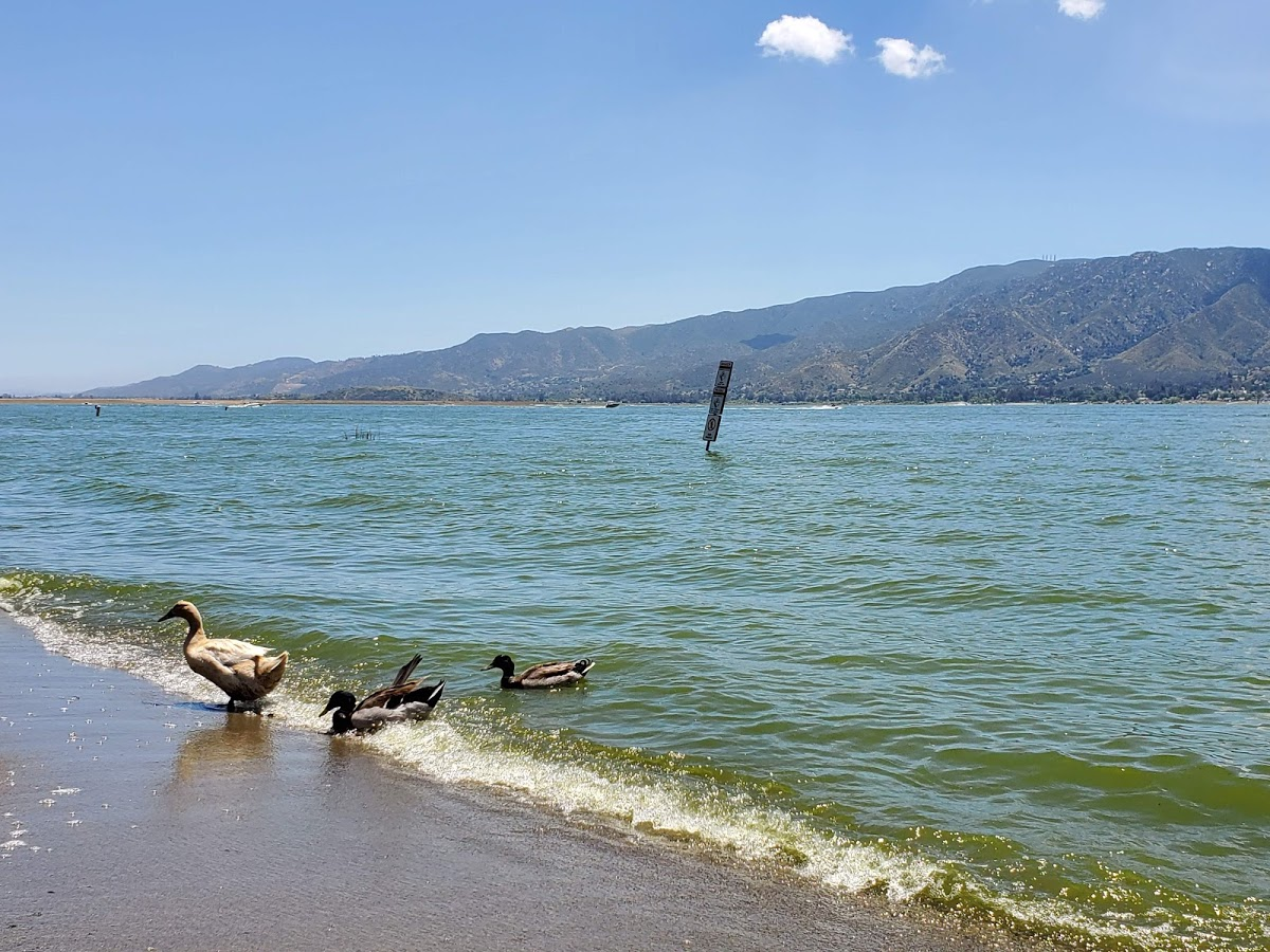 residential-lawn-cutting-businesses-in-Lake Elsinore-CA