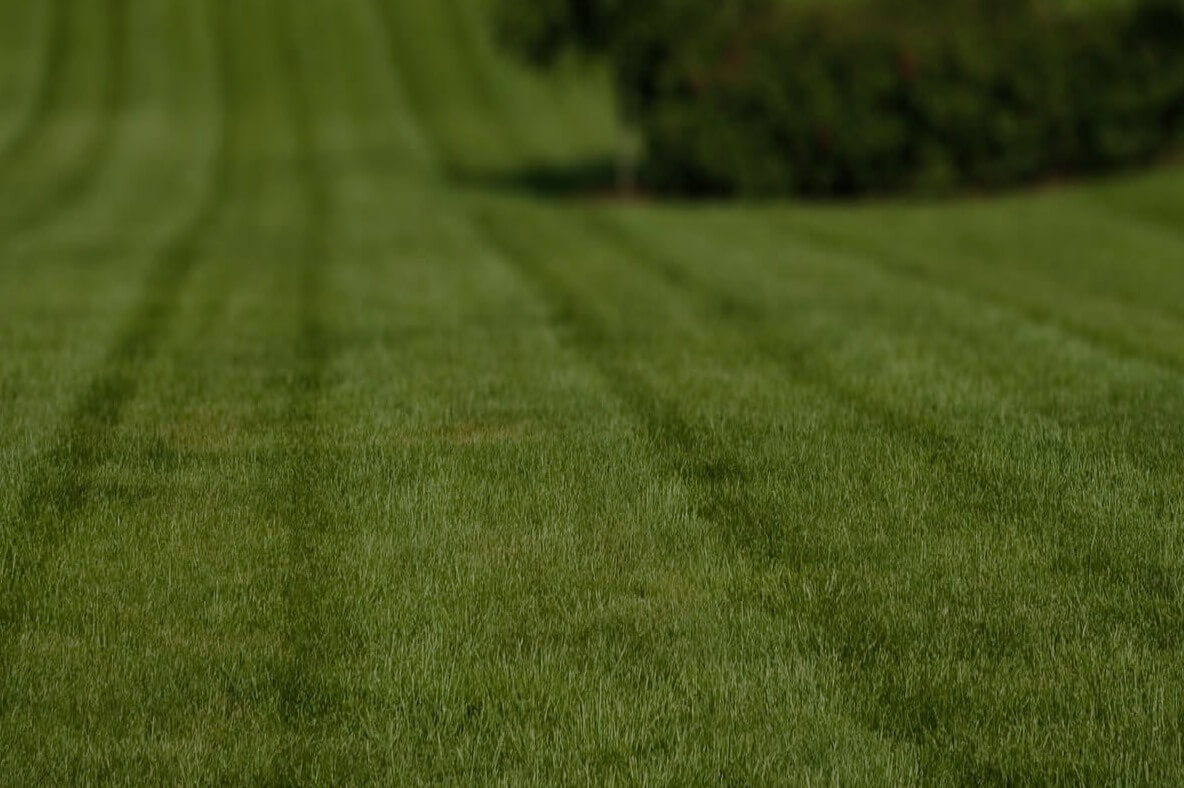lawn-maintenance-in-Farmington Hills-MI