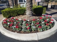 affordable-landscaping-maintenance-services-in-Yorba Linda-CA