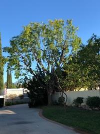 lawn-maintenance-in-Woodland Hills-CA