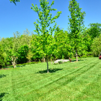 affordable-landscaping-maintenance-services-in-Salt Lake City-UT