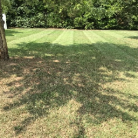 lawn-care-services-in-Arlington-TN