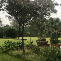 affordable-lawn-services-in-Manor-TX