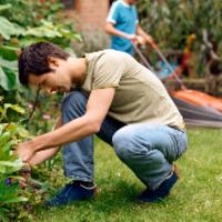lawn-maintenance-in-Redmond-WA