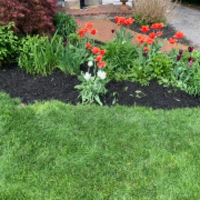 lawn-care-services-in-Blue Bell-PA