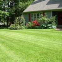 affordable-grass-cutting-businesses-in-Abilene-TX