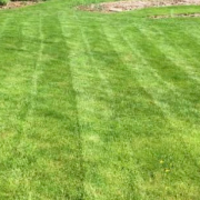 affordable-grass-cutting-businesses-in-Harvey-IL