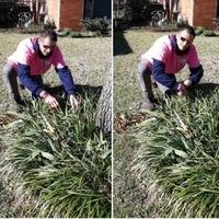lawn-maintenance-in-Farmers Branch-TX
