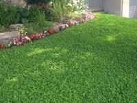 local-lawn-maintenance-contractors-in-Hesperia-CA