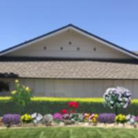 local-lawn-and-landscape-maintenance-services-near-me-in-Laguna Beach-California
