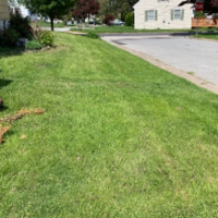 local-lawn-and-landscape-maintenance-services-near-me-in-Springfield-PA