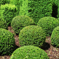 cheap-lawn-cutting-businesses-in-Bellevue-WA