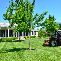 affordable-landscaping-maintenance-services-in-Edmonds-WA