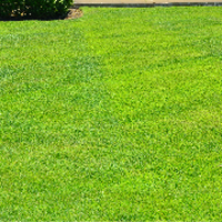 affordable-grass-cutting-businesses-in-Sammamish-WA