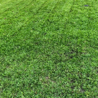 residential-lawn-cutting-businesses-in-Waukesha-WI