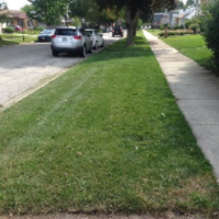 lawn-care-services-in-Tinley Park-IL