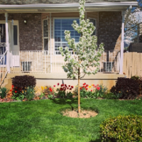 residential-lawn-cutting-businesses-in-Layton-UT