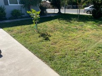 local-lawn-care-services-in-Alameda-CA
