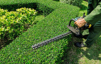 local-lawn-and-landscape-maintenance-services-near-me-in-Burbank-California
