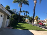 local-lawn-and-landscape-maintenance-services-near-me-in-Alhambra-CA