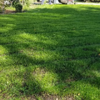 local-lawn-care-services-in-Hollywood-CA