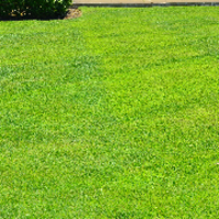 local-lawn-cutting-services-in-Albuquerque-NM