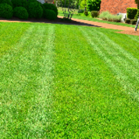 affordable-lawn-services-in-Cedar Park-TX