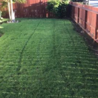 affordable-lawn-services-in-Pacific Beach-CA
