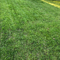 cheap-lawn-cutting-businesses-in-Wauwatosa-WI