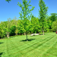 residential-lawn-cutting-businesses-in-Taunton-MA