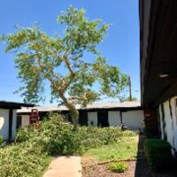 local-lawn-cutting-services-in-Del Mar-CA