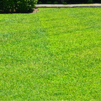 affordable-lawn-services-in-Gary-IN