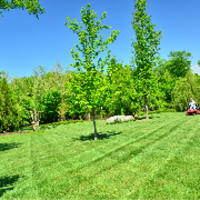 grass-cutting-businesses-in-Harvey-IL